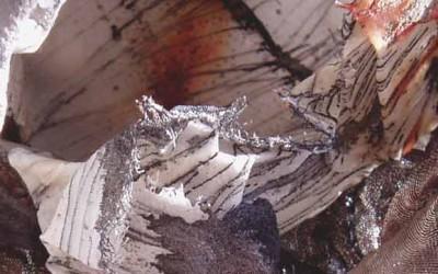 Alison F Bell – New Website
